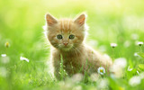 Widescreen cat photo 14730