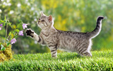 Widescreen cat photo 14864