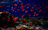 The beautiful underwater world 17245
