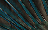 Feather wings close-up 2406