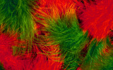 Feather wings close-up 29425
