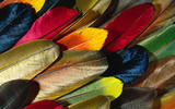 Feather wings close-up 342
