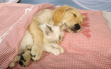 Widescreen puppy pictures 6902