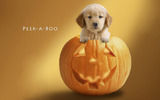 Widescreen puppy pictures 8079