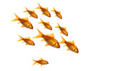 Jumping goldfish 1389