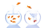 Jumping goldfish 344