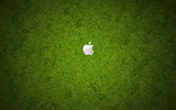 HD Apple wallpaper 20283