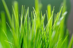 Close-up green space and grass 6563