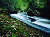 Wallpaper of forest streams 19999