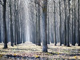 Serbia woods wallpaper 17042