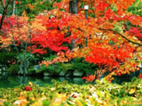 Autumn Theme 10160