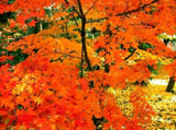 Autumn Theme 10365