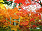 Autumn Theme 10668