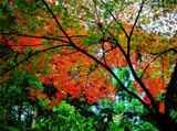 Autumn Theme 1432