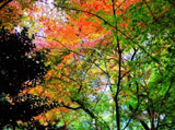 Autumn Theme 1604