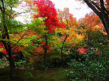 Autumn Theme 1775