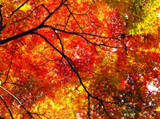 Autumn Theme 213
