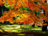 Autumn Theme 2449