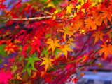 Autumn Theme 3717