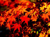 Autumn Theme 3865