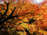 Autumn Theme 4599