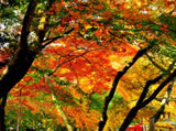 Autumn Theme 4745