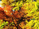 Autumn Theme 6024