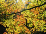 Autumn Theme 6164