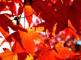 Autumn Theme 6807