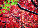 Autumn Theme 7297