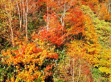 Autumn Theme 738