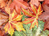 Autumn Theme 7416