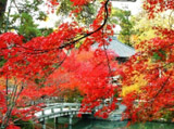 Autumn Theme 7766