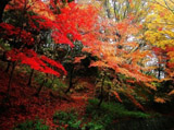 Autumn Theme 7879