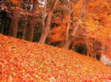 Autumn Theme 8441