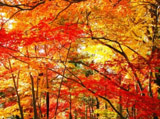 Autumn Theme 9423