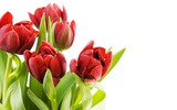 Large tulip picture 14139