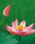 Used Lotus photo 10181