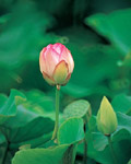 Used Lotus photo 10886