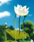 Used Lotus photo 11870