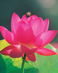 Used Lotus photo 12722