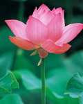 Used Lotus photo 12883