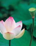 Used Lotus photo 13202