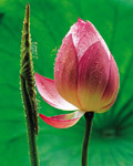 Used Lotus photo 14825