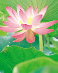 Used Lotus photo 14957