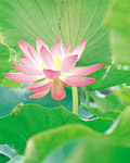 Used Lotus photo 15022