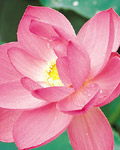 Used Lotus photo 15086