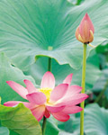 Used Lotus photo 15274