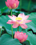 Used Lotus photo 15765