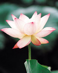 Used Lotus photo 16001